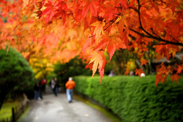 Portland Japanese Garden 11-11-11