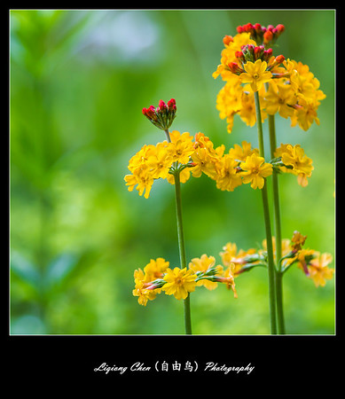 Unknown-flower 36