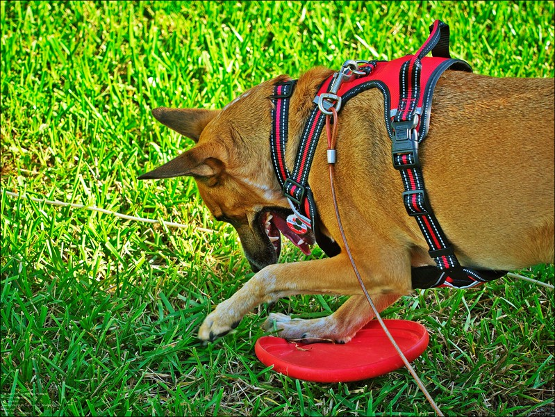 PA270016_tip new harness.jpg