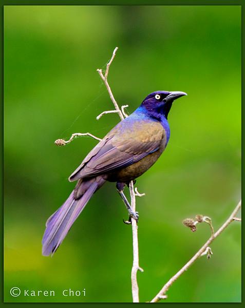 Bird 5 sm.jpg