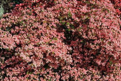 National Arboretum - Spring 2011