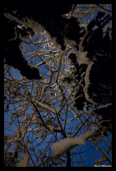 Branches in the Night Sky