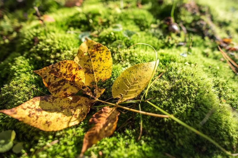 foliage-2014-42.jpg