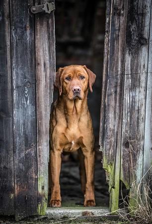 The Dog Photographer