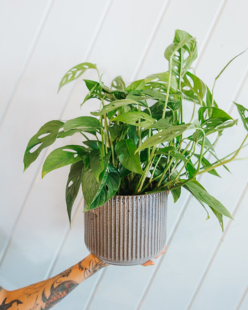 04-25-20 Plants