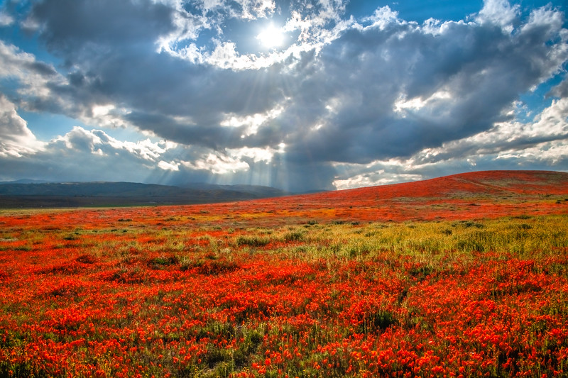 Poppy Reserve Spring Symphony #7 Antelope Valley Poppy Reserve Spring Storm God Rays Wild Flowers Super Bloom Fine Art Landscape Nature Photography!    California Wildflowers Superbloom!  Elliot McGucken Fine Art Landscape Nature Photography & Luxury Wall Art