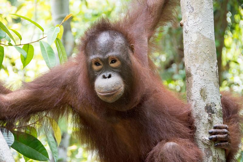Borneo-2236.jpg
