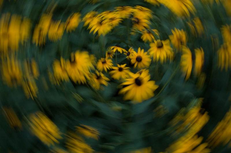 flowerspin.jpg