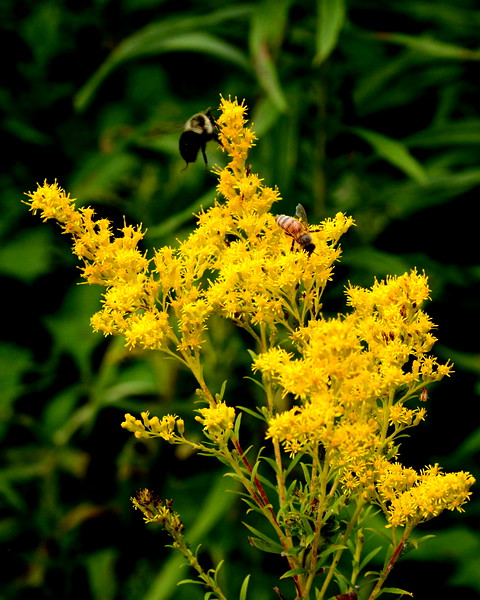 Bees Hawk Meadow Farm 08_25_19.JPG