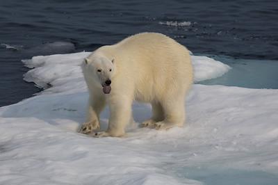 Baffin trip 1, 2014
