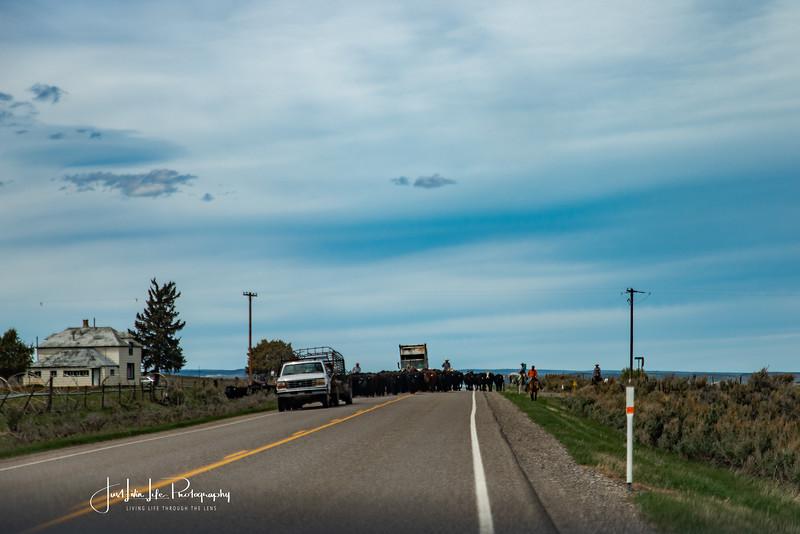 RoadTripMay20BearRiver-11.jpg
