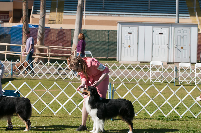 20170205_Australian Shepherds_Lost Dutchman Kennel Club-74.jpg