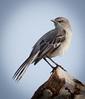0021 - Birds by Condo 2-16-13-9232-Edit-Edit