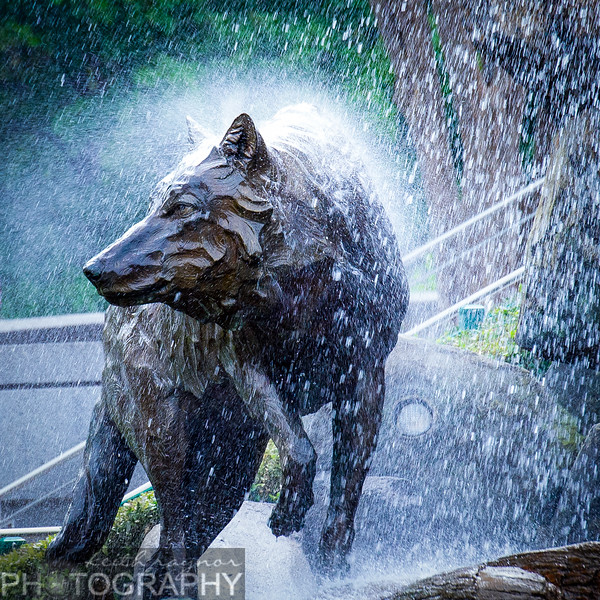 keithraynorphotography ncstate wolfpack troy football-1-11.jpg