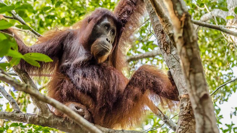 Borneo-2275.jpg