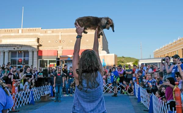 Sixth Annual Wiener Dog Races
