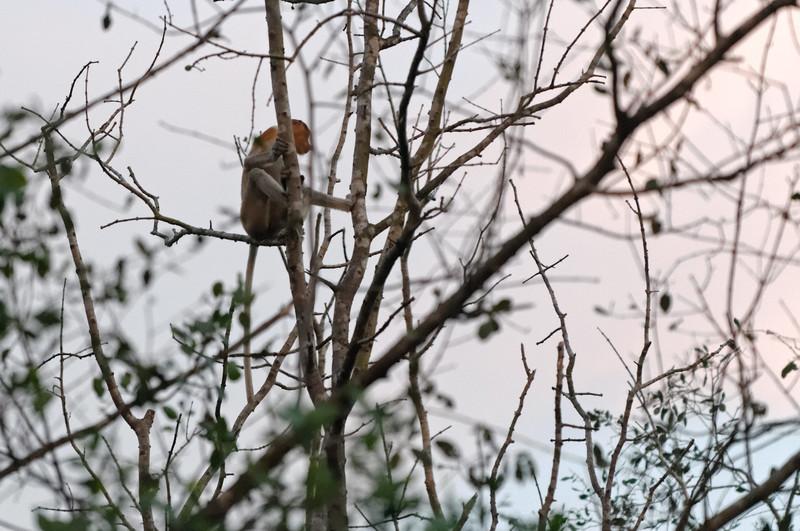 Die Affen haben wir gesehen kurz bevor die Sonne unterging.