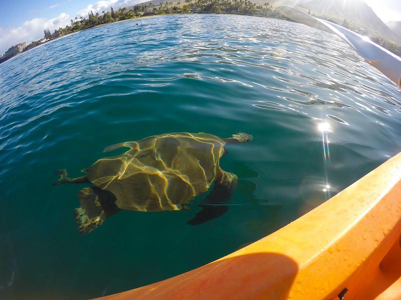 Maui, Day 5: Kayaking with Lahaina Paddle.