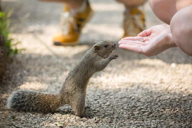 Machida Squirrel Park