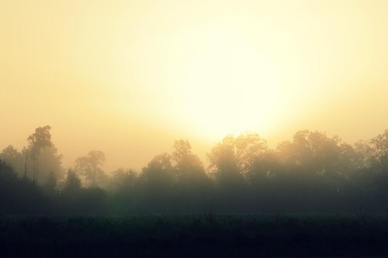 Foggy mornin' down south.