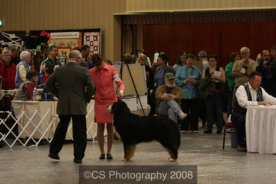 Veteran Dog 9-11yrs-BMDCA 2009