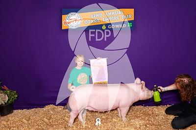 Junior & Open Breeding Swine