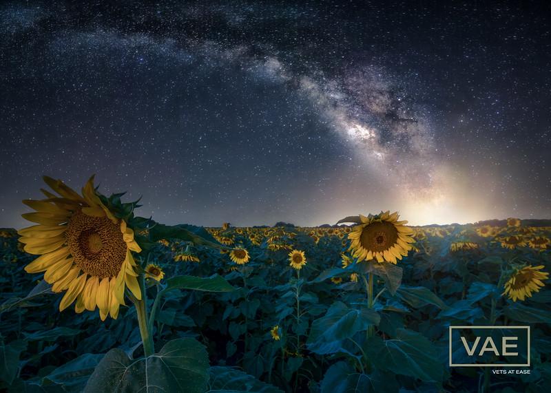 Sunflowers-31-Edit.jpg