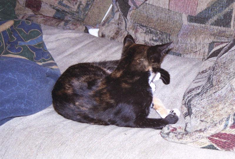 2003 12 - Cats 03.jpg