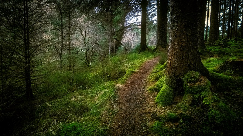 Forest Shadows-157.jpg