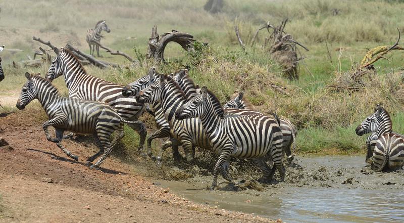 East Africa Safari 335.jpg