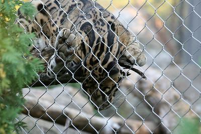 Zoo -- 8-12-2007