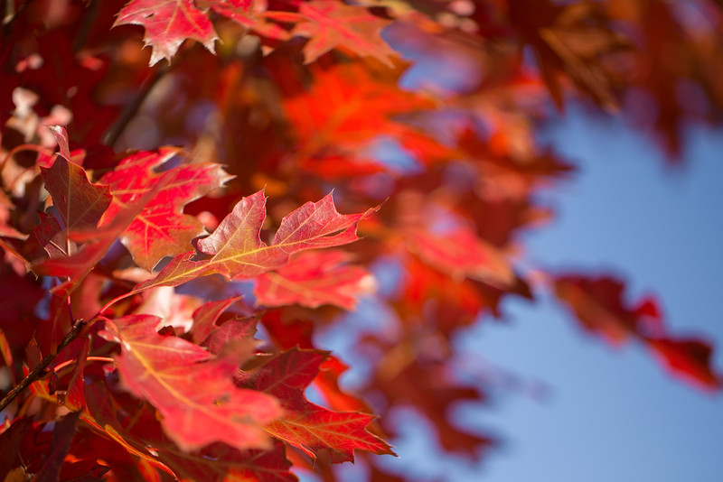 20151024-Fall Colors-84.jpg