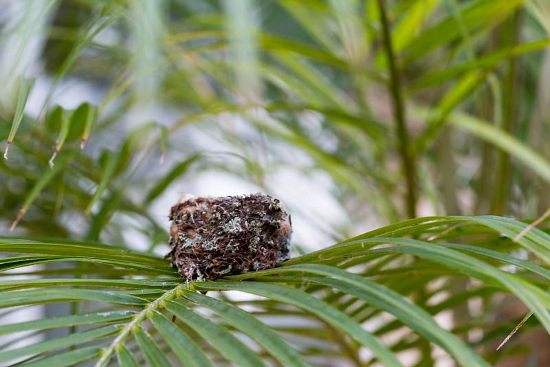 I found a nest