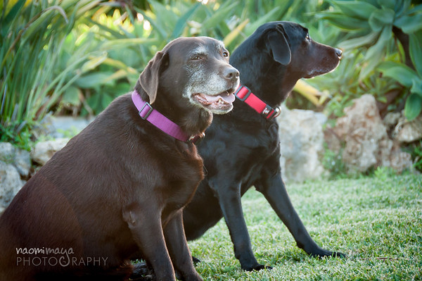 Doggies!