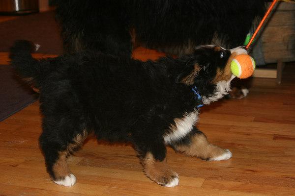 AJ (Grn) 8 weeks old