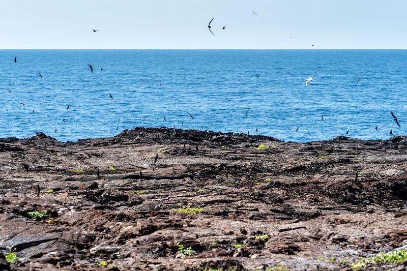 Galapagos-4164.jpg
