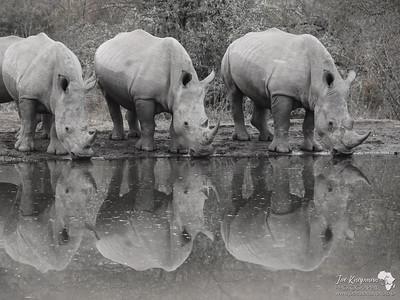 Rhino B&W