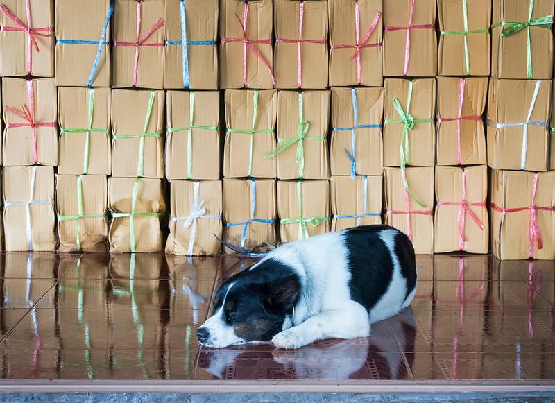temple dog.jpg