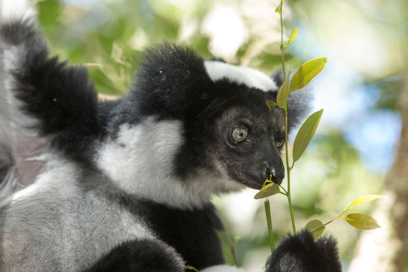 Madagascar_2013_FH0T9470.jpg