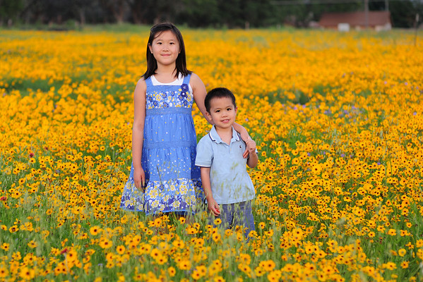 Wildflowers/Wildseed Farms 2010