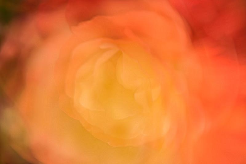 june 1 - flower.jpg