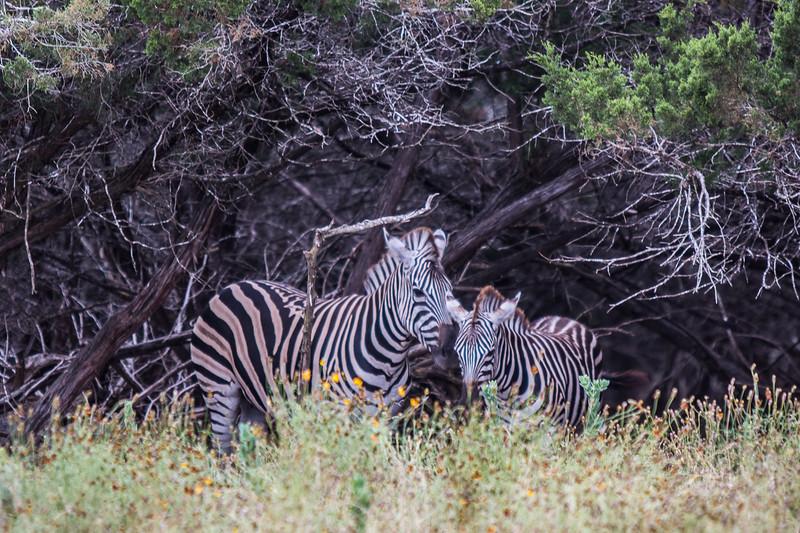 Wildlife Ranch-0247.jpg