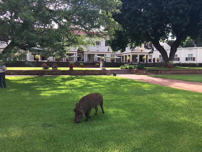 Foraging guest at the Victoria Falls Hotel - Rob Williamson