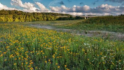 Wetland Restoration - Summer 2012