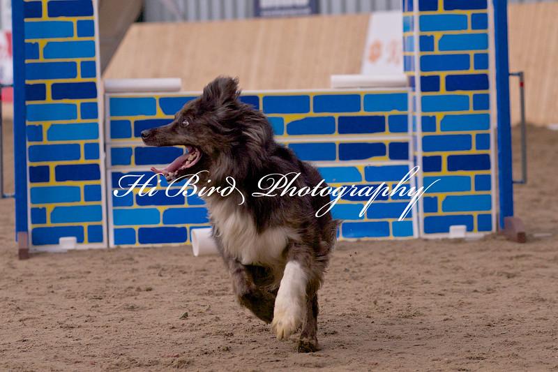 medium dog agility 1163.jpg
