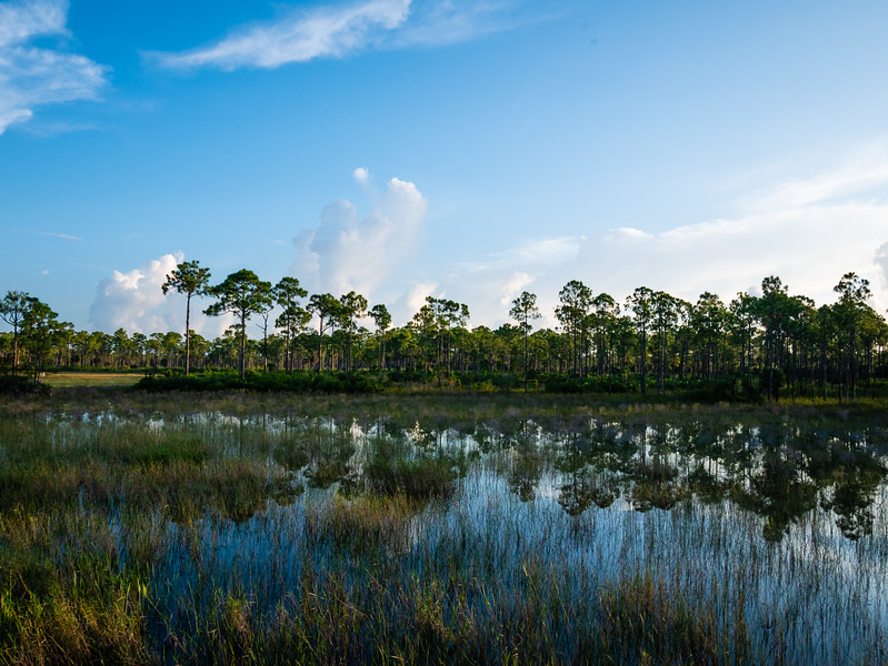 Sunrise at Sweetbay Natural Area in West Palm Beach on Friday, August 31, 2018. (Joseph Forzano / The Palm Beach Post)