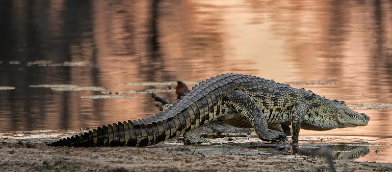 2014-08Aug-Okavango Masters-92-Edit.jpg
