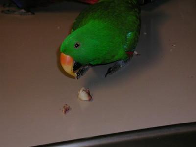2nd Album of Past Parrots Rescues in our Sanctuary