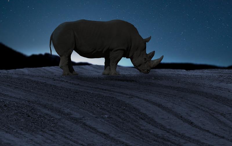 blue-rhino.jpg