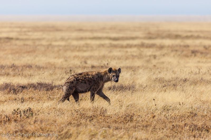 South_Serengeti-21.jpg